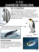 Emperor Penguin Non Fiction Unit AND Scavenger Hunt