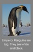 Emperor Penguins: An early reader with math, science and writing extensions!