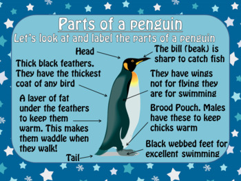 Emperor Penguins - PowerPoint and Worksheets by The Ginger Teacher