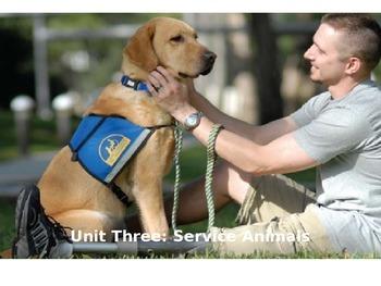 Empowering Writers Third Grade Service Animals Unit Lesson