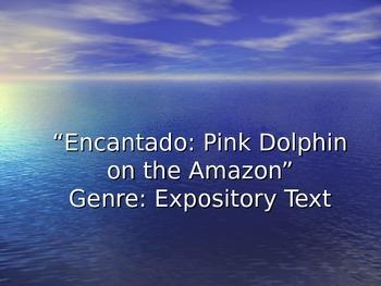 Encantado Pink Dolphin Vocabulary Power Points Reading Str