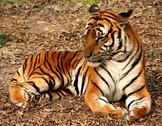 Endangered Animal Webquest