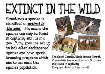 Endangered Animals-  Definition of Terms
