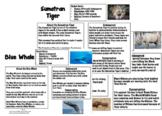 Endangered Animals Information Sheets