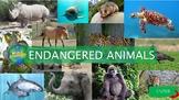 Endangered Animals (Interactive)
