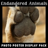 Endangered Animals Photo Poster Display Pack