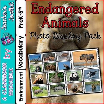 Endangered Animals Photo Poster Display Pack {UK Teaching