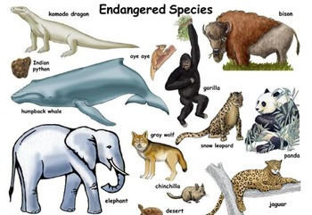 Endangered Animals Unit - 25 review articles/lessons and 25 powerpoints