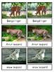 Endangered Land Animals--Montessori 3-part cards--Safari Endangered Toob