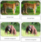 Endangered Species (Land)  Safari Toob Cards - Montessori