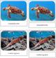 Endangered Species (Marine)  Safari Toob Cards - Montessori