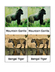 Endangered Species Matching Cards-Montessori