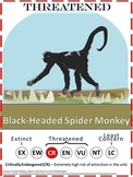 Endangered Species Posters - 18 Different Animals - Shows IUCN's Rating