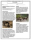Endangered Species: The African Wild Dog