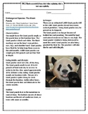 Endangered Species: The Giant Panda