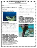 Endangered Species: The Green Sea Turtle