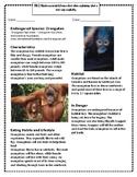 Endangered Species: The Orangutan