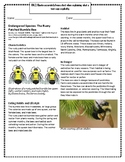 Endangered Species: The Rusty Patched Bumble Bee