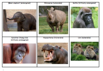 Endangered & Vulnerable Animals