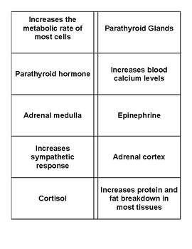 Endocrine Review--- Hormone Memory Game