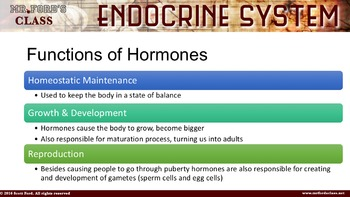 Endocrine System: Anatomy and Physiology