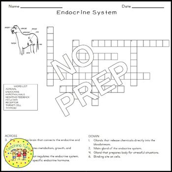 The Endocrine System Crossword Puzzle