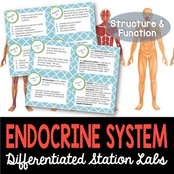 Endocrine System Student-Led Station Lab