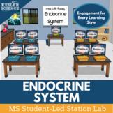 Endocrine System Student-Led Station Lab