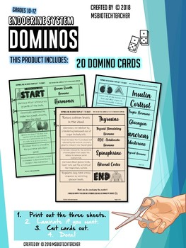 Endocrine System - Domino Review Cards - High School