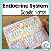 Endocrine System Doodle Notes- Glands & Hormones  [Distanc