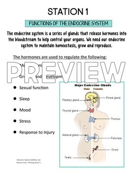 Endocrine System Exhibition Stations