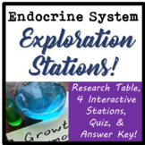 Endocrine System Exploration Stations