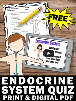 free endocrine system human body systems 5th grade by promoting success
