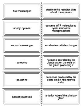 Endocrine System Flash Cards