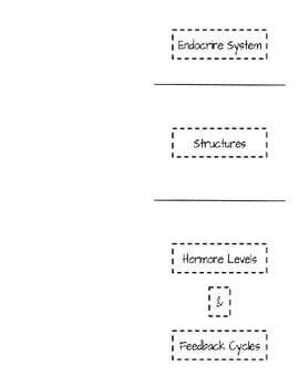 Endocrine System Foldable