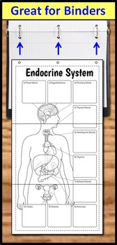 Endocrine System Foldable - Big Foldable for Interactive Notebooks or Binders