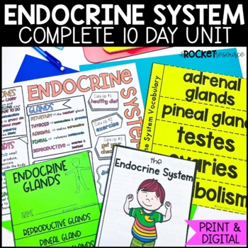 Endocrine System: Functions, Glands, Hormones, Diabetes, Adrenaline, and more!