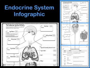Endocrine System Infographic