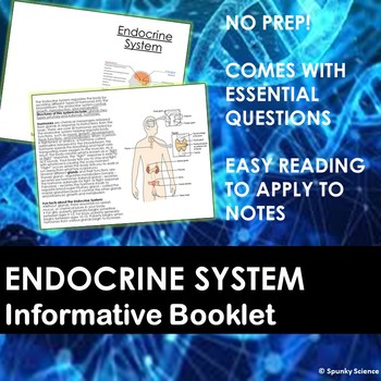 Endocrine System Information Booklet