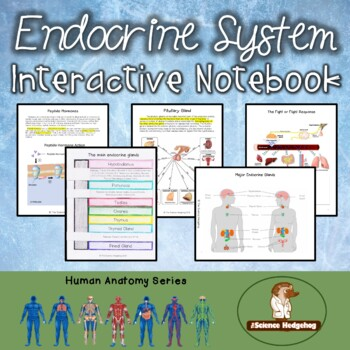 Endocrine System Interactive Notebook