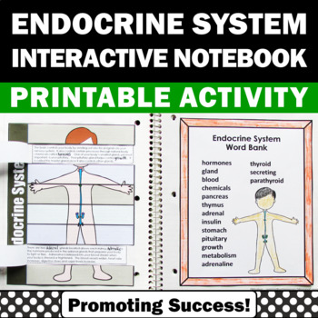 Endocrine System Activities, Human Body Systems Foldable,