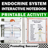 Endocrine System Activity, Human Body Systems Interactive Notebook
