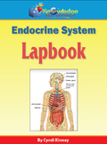 Endocrine System Lapbook - EBOOK