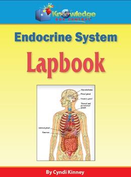 Endocrine System Lapbook - EBOOK