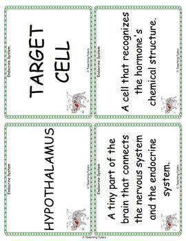 Endocrine System Vocabulary Cards