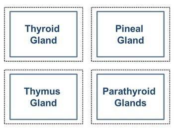 Endocrine System Mix and Match Cards
