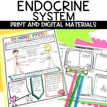 Endocrine System Nonfiction Article and Doodle Sketch Note Activity