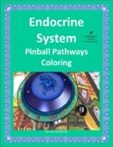 Endocrine System Pinball Pathway Coloring Worksheet