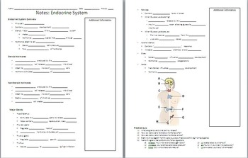 Endocrine System PowerPoint