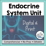 Endocrine System- PowerPoint, Illustrated Notes, Activity & Diagrams